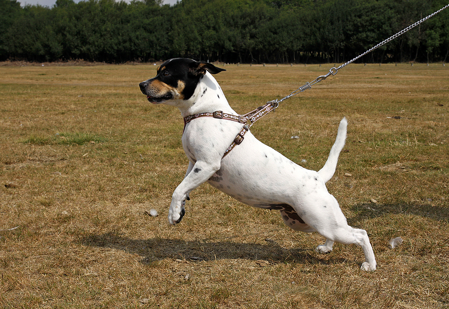 6 Ways To Stop Your Dog Pulling The Leash