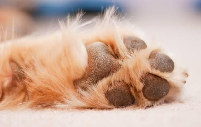 real dog paws
