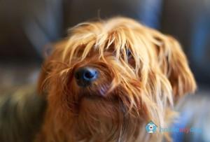 Dog Sitter in Sandyford