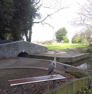 Gabrielle's Doggie Paradise in Rathfarnham (4)