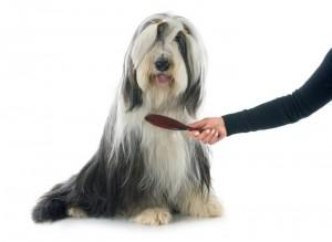 Brush your dog everyday