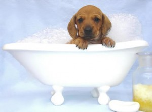 Bathing your pooch is very important