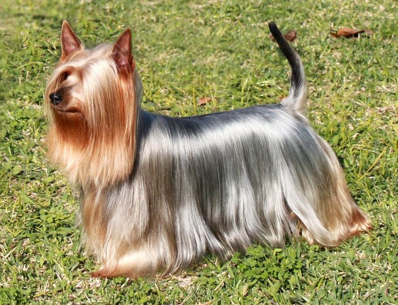 Image result for dog with shiny hair