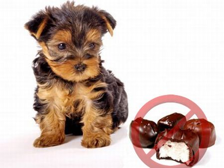 5 things your dog should never eat.