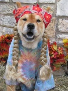 Dogs In Autumn: 8 Things To Avoid!