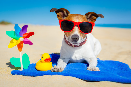 Tips For Dogs In Warm Weather