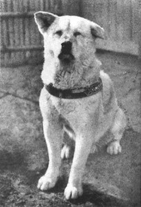 Histories Most Famous Dogs - Top 14