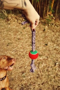 25 DIY Toys For Dogs