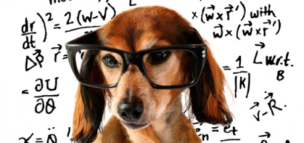 Back to School - Your Dog Can Be Learning Too!