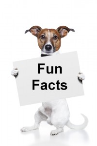 23 Fun Dog Facts
