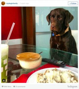 13 Pictures That Prove Labradors Rule