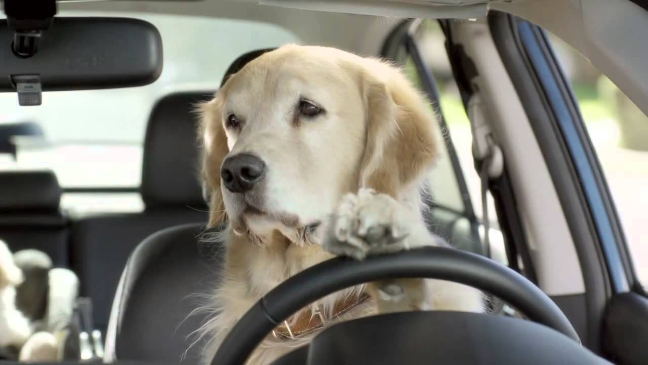 How To Deal With Your Dogs Car Anxiety And Travel Sickness