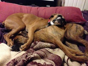 24 Dogs who Found Their Valentine