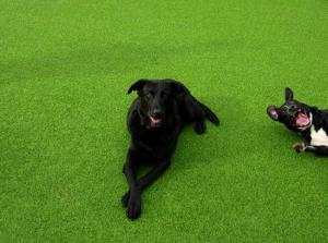 11 Ultimate Dog Photobombs