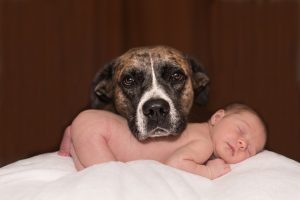 dog and newborn baby