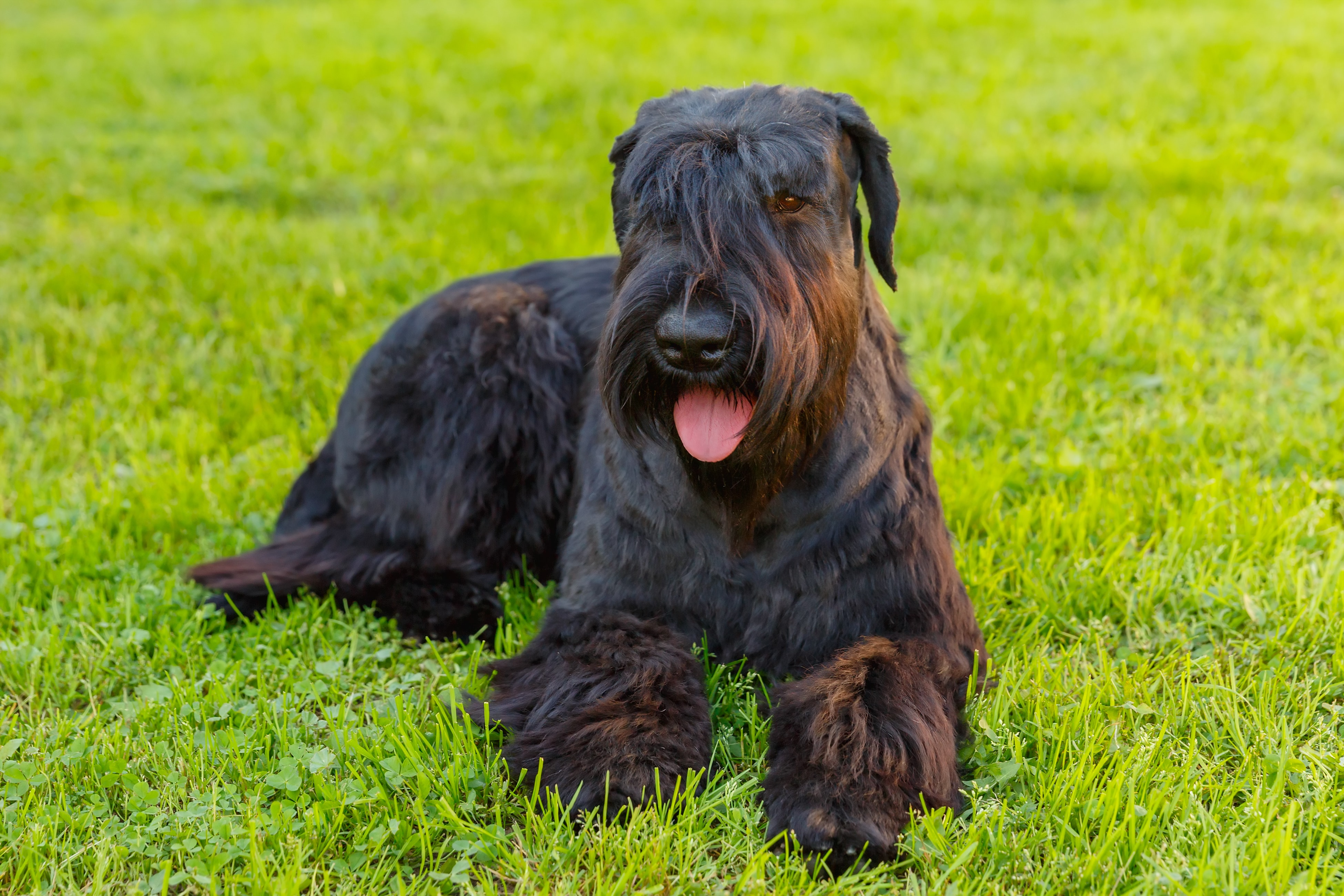 What You Need To Know About Hypoallergenic Dogs | HouseMyDog Blog