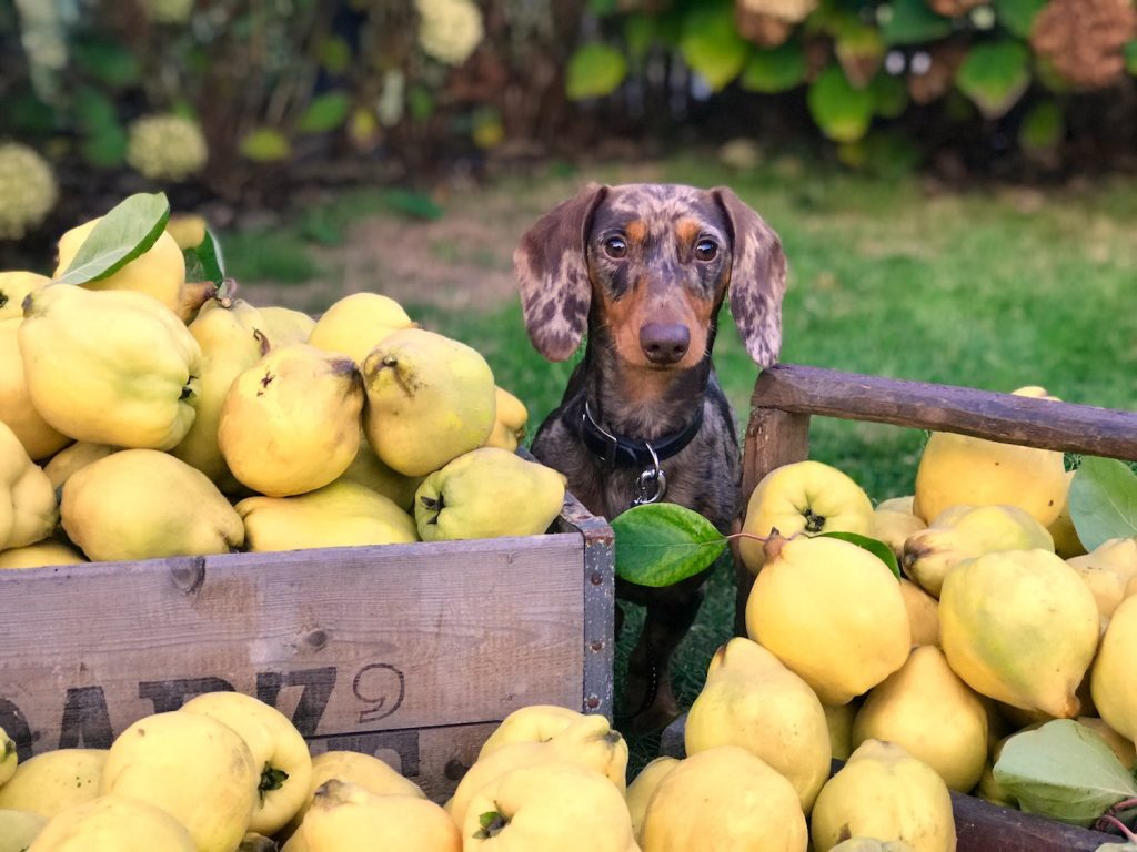 Fruit and veg for dogs